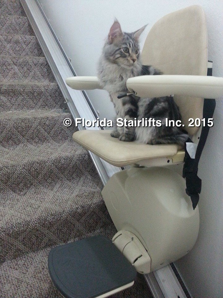 Maine Coon Cat rides stairlift