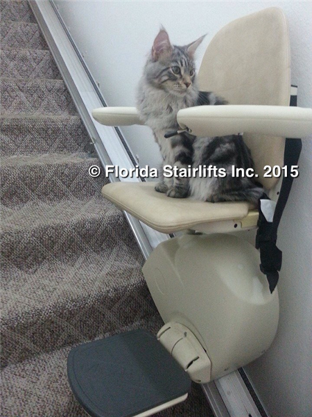 Even Maine Coon Kittens can safely ride our MediTek stairlift.